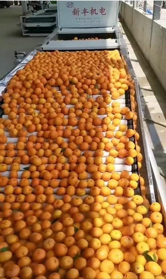 湖北宜昌水果打蜡机_水果清洗打蜡机的使用方法