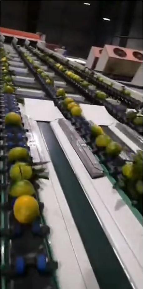 水果电脑分级机